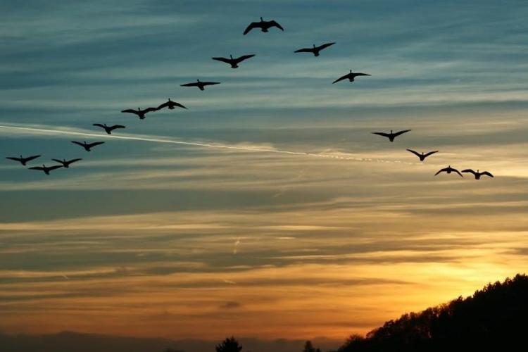 Migrating birds 1 e1537696729874